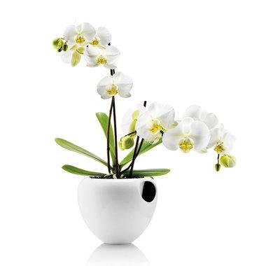 Eva Solo Orchidee pot